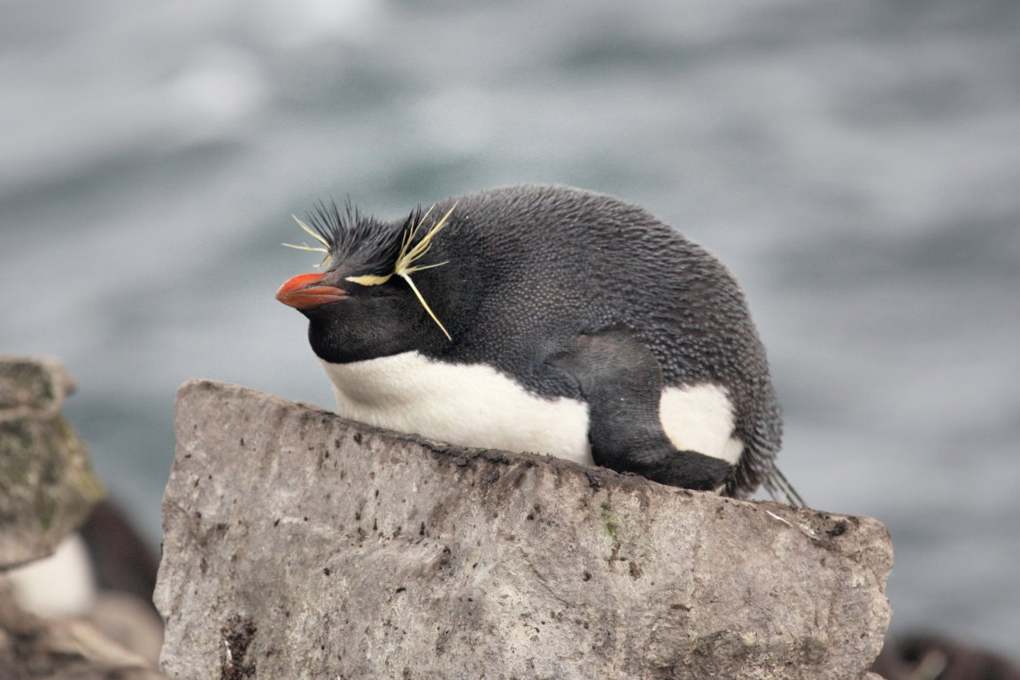 Stanley Steamer Car >> Falkland Islands, Malouines, Islas Malvinas, Stanley, Port ...